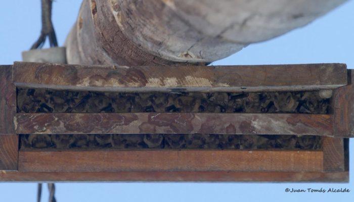 nido de madera para murcielagos
